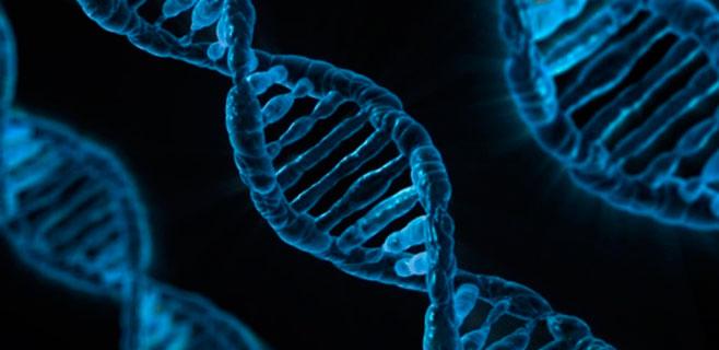 El genoma se puede operar