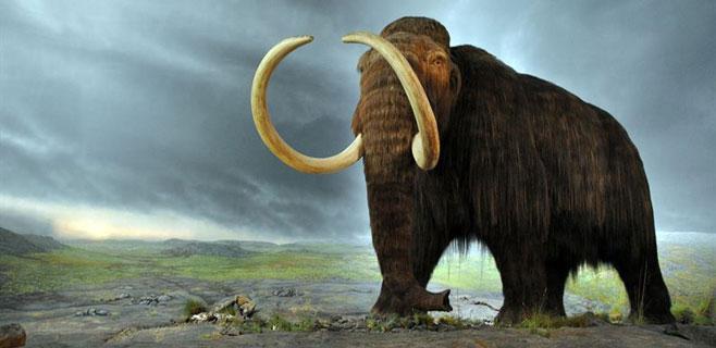 Los mamut se extinguieron por culpa de la caza humana