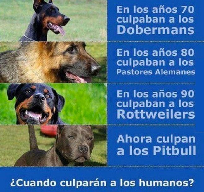 No son los perros, son los dueños