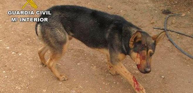 Dispara a su perro en el ojo