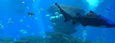 Tiburones para una noche de miedo especial
