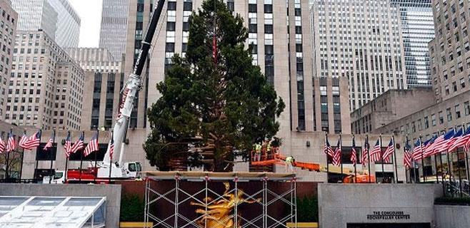 Nueva York coloca el árbol de Navidad del Rockefeller Center