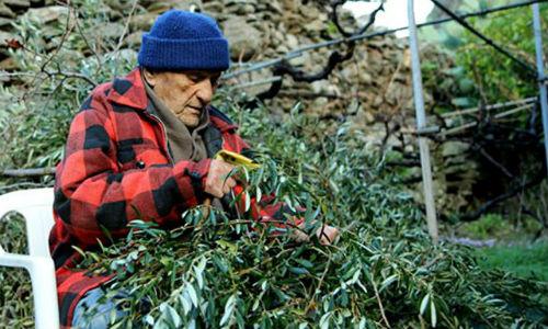 noticias mallorca El vino sería el secreto de la longevidad en Grecia