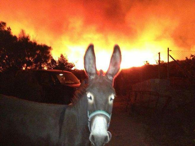 burro-arta