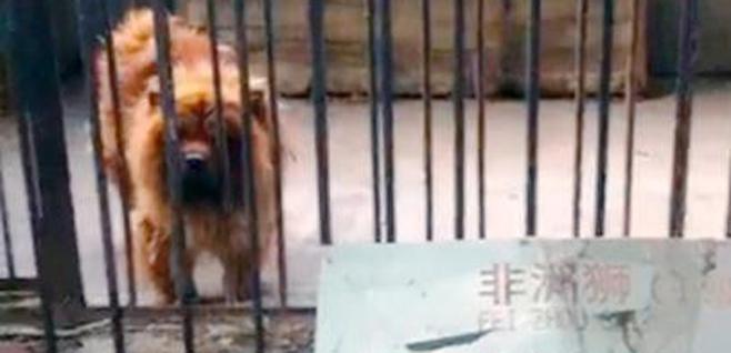 perro-leon
