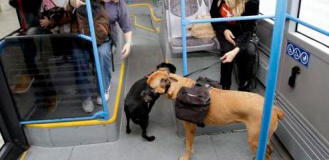perro-bus
