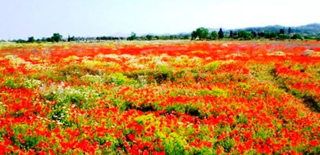 flores-silvestres