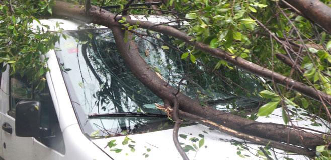 coche-arbol-palma